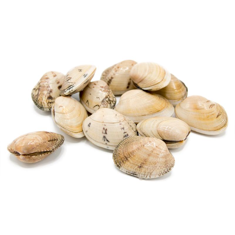 Almeja Babosa de Galicia